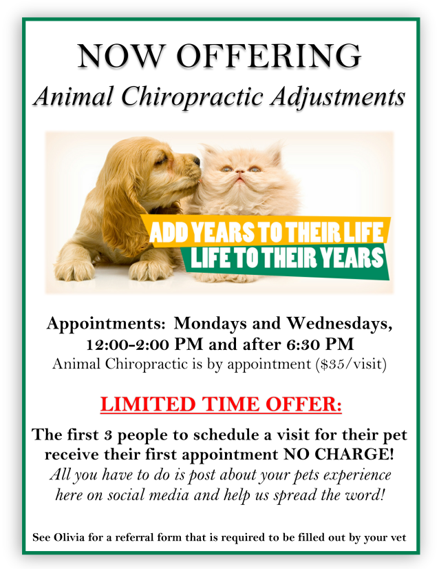 animal chiropractic flyer